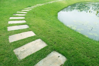 Pathway in the garden with waterlily pond.