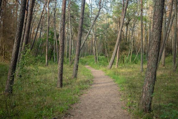 낮에는 햇빛 아래 잔디와 나무로 덮인 숲의 통로