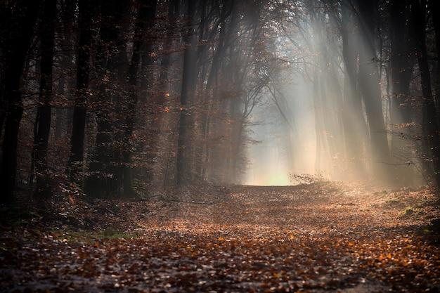 秋の日差しの下、木々に囲まれた葉っぱに覆われた森の小道