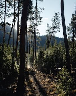 Тропа в лесу, в окружении деревьев под солнечным светом с горами