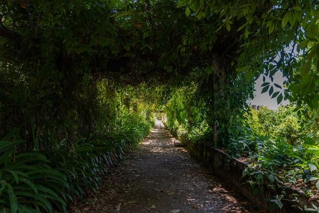 ポルトガルのトマールで日光の下で緑に囲まれた庭の経路