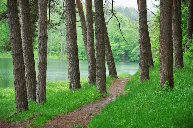 湖の近くの緑の森の小道、風光明媚な