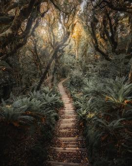 Путь в тропических джунглях новой зеландии