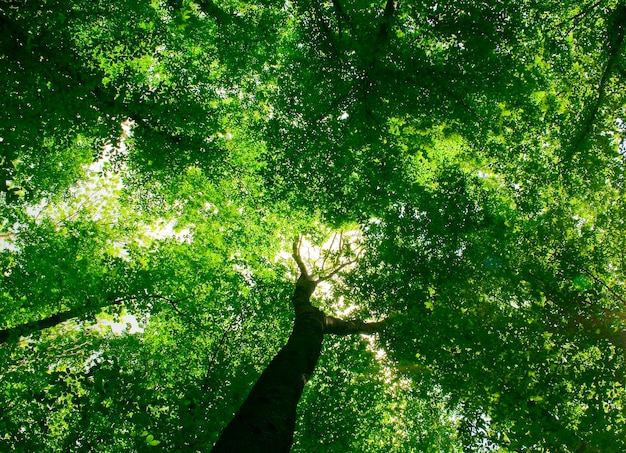 日光のある森の中の小道