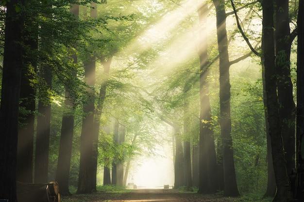Тропинка посреди зеленых лиственных деревьев с солнцем сквозь ветви