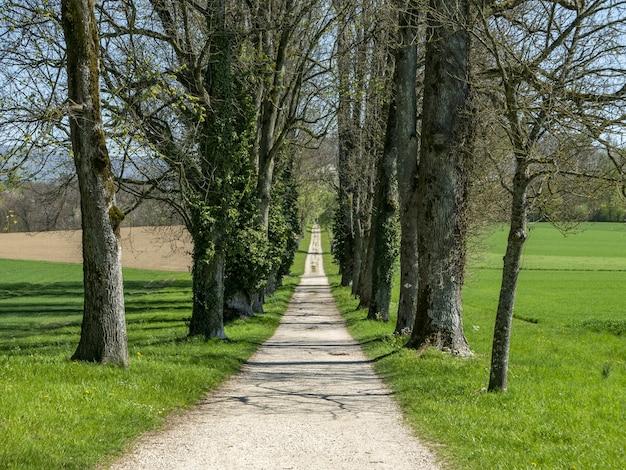 高層の木々に囲まれた公園の真ん中にある小道