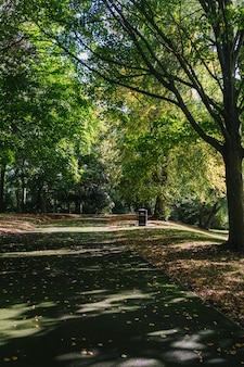 森の背の高い木の真ん中にある小道