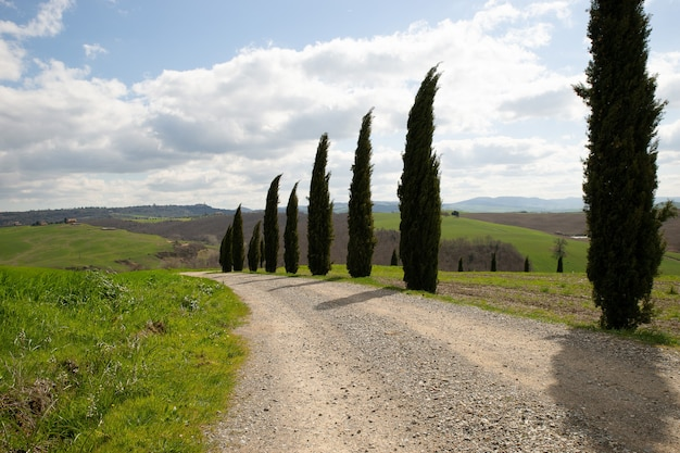 Sentiero in mezzo a campi erbosi e alberi con un cielo nuvoloso blu