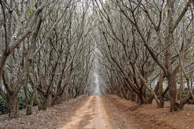 Percorso in mezzo agli alberi senza foglie