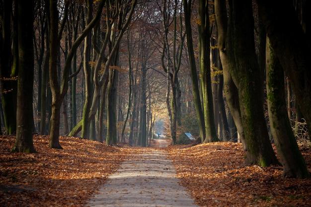 秋の日差しの下、森の中の木々や葉に囲まれた小道