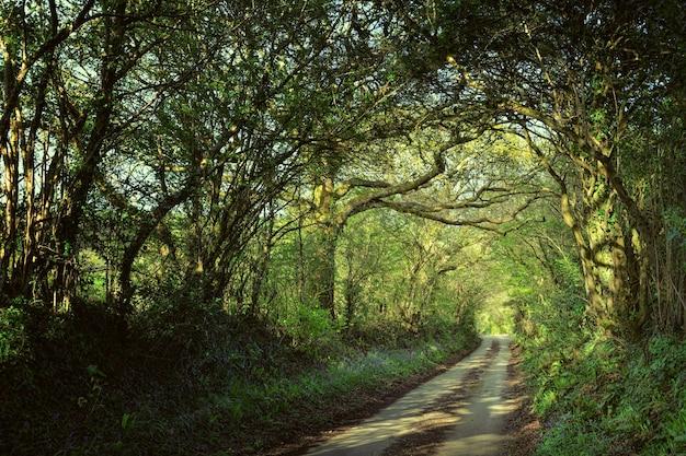 Sentiero attraverso la foresta