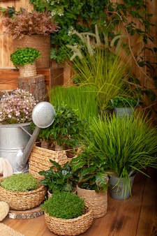Patio of a wooden house with houseplants in pots and watering can. garden tools. young plants growing in garden. growing potted plants.