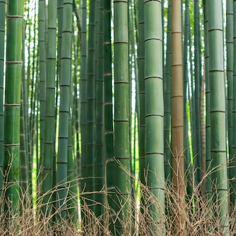 Pattern of bamboo forest