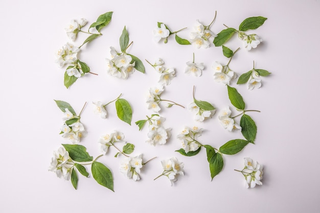 Pattern of bud jasmine and leaves scattered on a gary  background overhead view flat lay