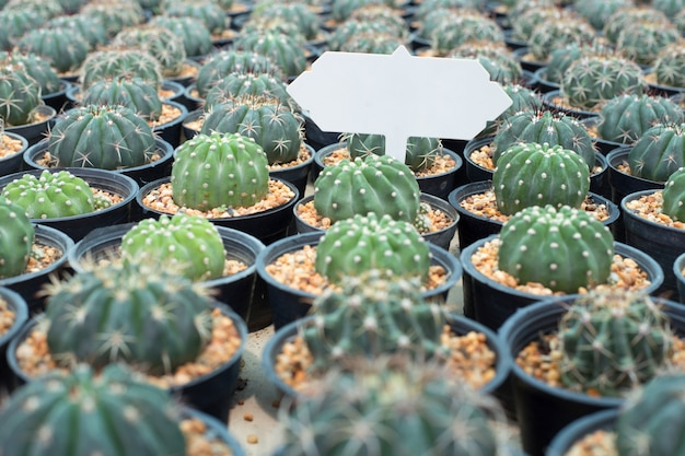 Pattern of clay pots cactus