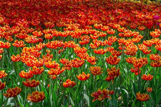 A pattern of flowering flowers