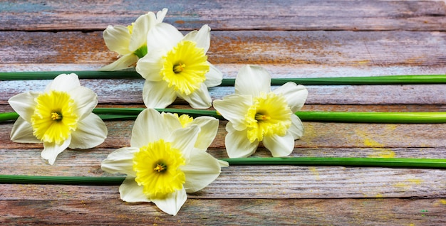 The pattern of flowers narcissuses at retro wooden background with copy space