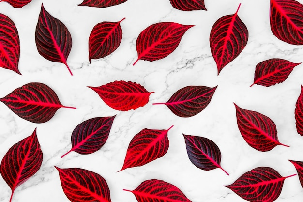Pattern of fresh red leaves on white background.