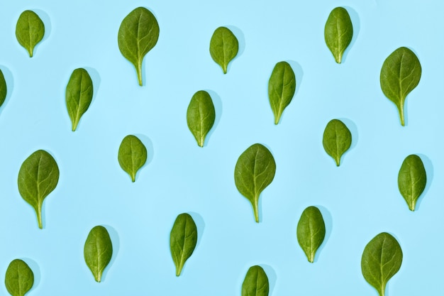 Pattern of fresh spinach leaves isolated on soft blue background. fresh green spinach, top view.