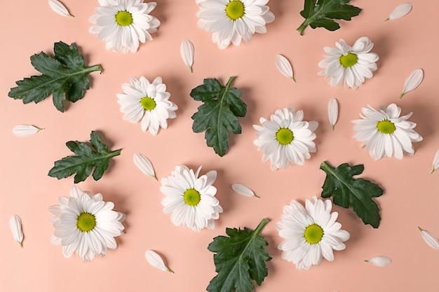 ピンクの背景に大きな秋のlevcantemellaカモミールの花からのパターン