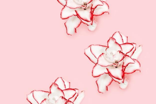 빨간색 테두리가있는 모란 백합 흰색 피는 백합 꽃의 섬세한 꽃이 만발한 꽃 패턴