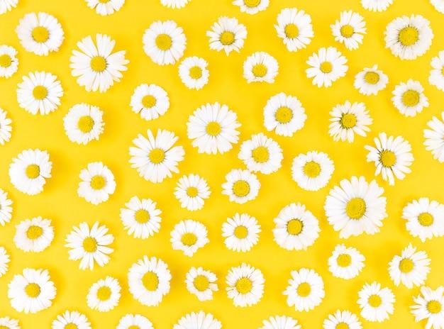 黄色の背景にカモミールの花からのパターン。