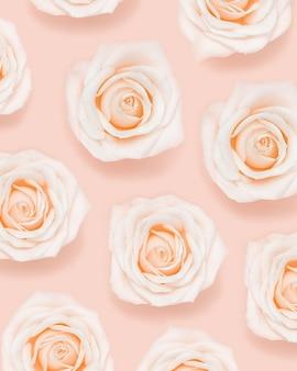 분홍색 흰색 부드러운 장미 꽃 패턴 자연 꽃 휴일 최소한의 개념