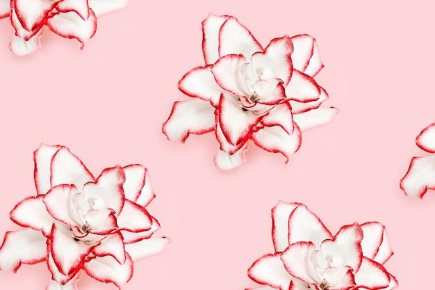 빛에 빨간색 테두리 모란 백합과 흰 백합 꽃 패턴