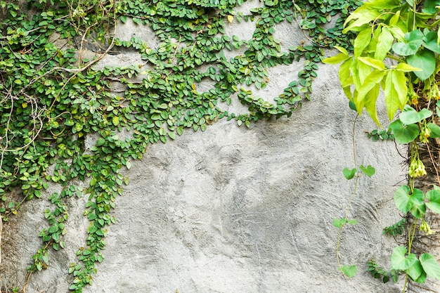 Pattern green leaf on concrete wall background