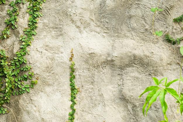 콘크리트 벽 배경 패턴 녹색 잎