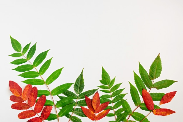 Pattern of green and red autumnal leaves