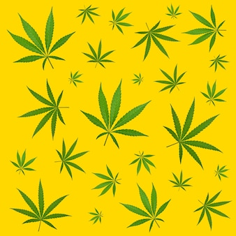 Pattern of hemp cannabis plant leaves over yellow background