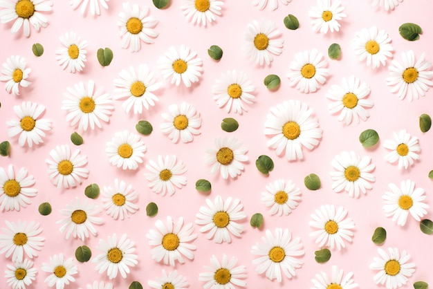 Pattern made of chamomile, petals, leaves on pink