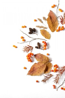 Pattern made of leaves, cones and rowan on white background