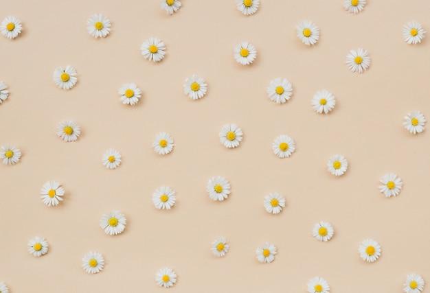 Pattern made of little beautiful white chamomiles