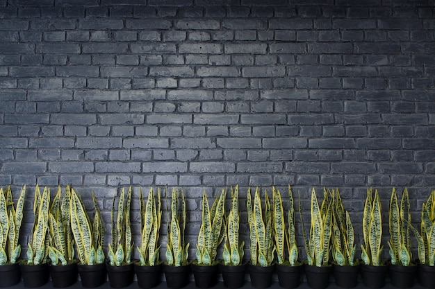 Pattern of natural brick wall and artivicial sansevieria flower plant. natural background.