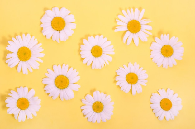 Pattern of natural chamomile flowers on a yellow background