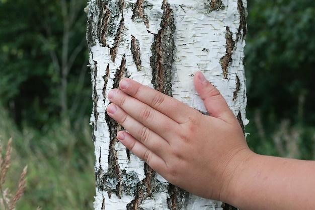Образец коры березы с полосами черной березы на расшиве белой березы и с текстурой коры деревянной бересты.