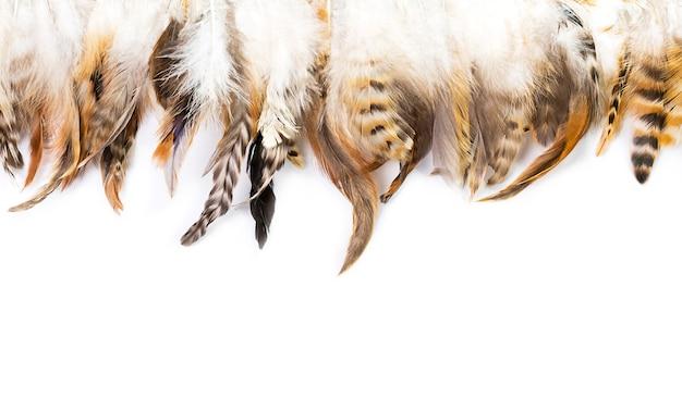 白で隔離の鳥の羽のパターン