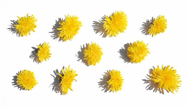 白い孤立した背景に異なる黄色のタンポポのパターン