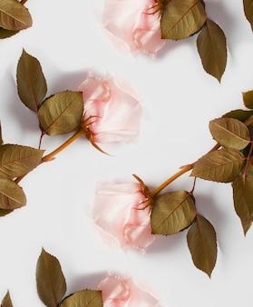 Картина розовых роз на белой стене. концепция нежных стен с цветами, стенок для цветочных магазинов, свадебных надписей, нижнего белья, открыток и парфюмерии.
