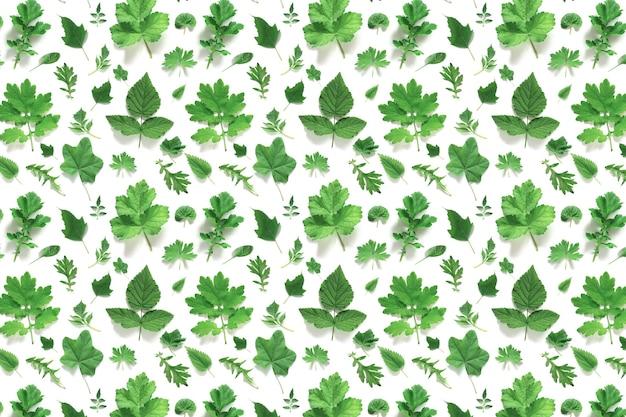 Узор из различных натуральных зеленых листьев на белом фоне, как фон или текстура. весенние, летние обои для вашего дизайна. вид сверху плоская планировка.