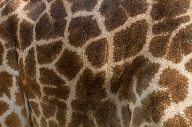 Pattern on the skin of giraffes