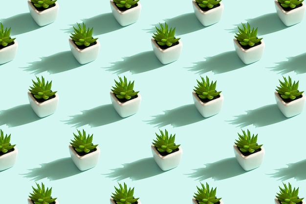 Pattern of succulents in white pots on mint background, haworthia concept