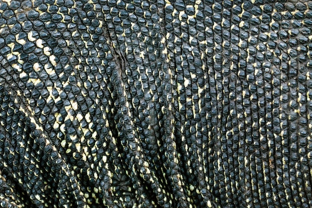 The pattern and the surface of the water monitor.