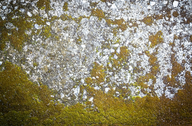 Pattern and texture of concrete with plant
