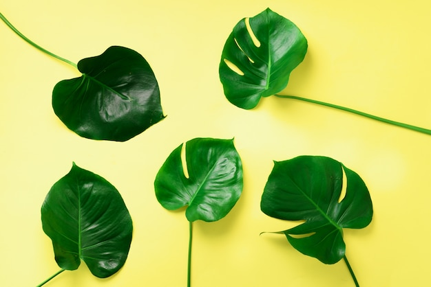 Pattern of tropical monstera leaves on yellow background. flat lay. top view. pop art design, creative and exotic summer concept. minimal style.