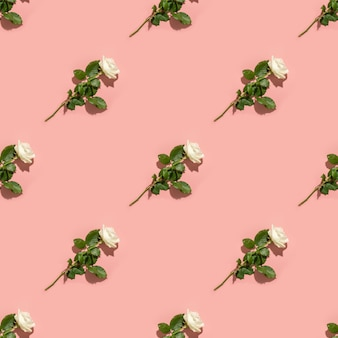 Pattern of white rose flower with shadow on pink background.