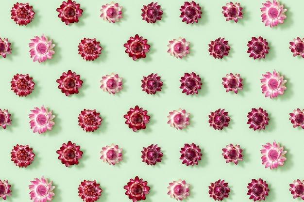 녹색에 마른 꽃 작은 꽃의 근접 촬영 꽃 봉 오리와 패턴