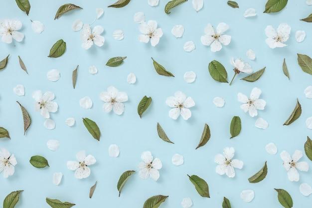 꽃과 밝은 파란색 배경에 피 달콤한 체리의 잎 패턴. 휴가 초대장 봄 개념 및 배경 이미지입니다. 평면도.